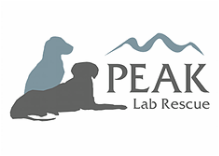 Partners   Dog Training Camp USA